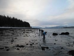 Students collecting marine biota at low tide on a dark and cold November day at Gustavus, the Gateway to Glacier National Park. Photo