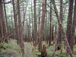 Rain forest near Ketchikan. Photo