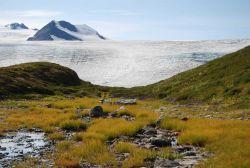 Terminus of Exit Glacier. Photo