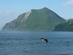 An eagle flying away in the vicinity of Dutch Harbor. Photo