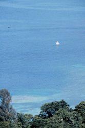 A sunfish sailboat on the lagoon Photo