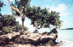 Coral rock shoreline Photo