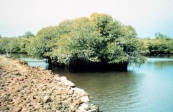 Coral rock islets and mangrove shoreline Photo