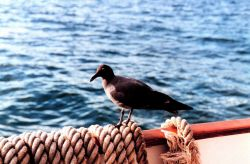 A bird in Fernandina Island, Galapagos Islands Image