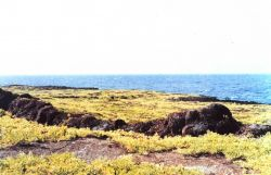 A lava terrace with colonizing greenery extends to the sea. Image