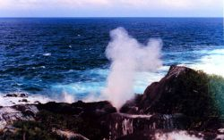 A blow-hole shooting pressurized water high into the air. Image