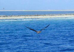 Clipperton Island, a classic atoll Photo