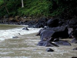 A rocky beach on Isla Cocos. Photo