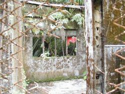 Overgrown and deteriorating prison walls at Isla Gorgona. Photo