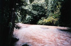 A jungle river in the Costa Rican rain forest at the Carara Biological Reserve. Image