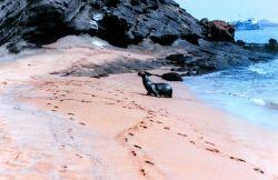 Sealion strolling ashore Photo