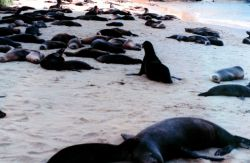 Sealions in the shade on a beach Photo