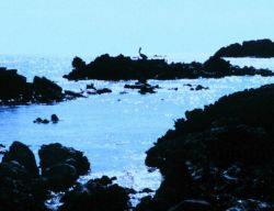 Pelican silhouetted in the bright sunglint Photo