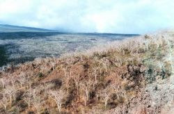 Arid climate vegetation over volcanic landscape Image