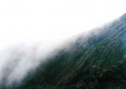 Costa Rican rain forest. Photo