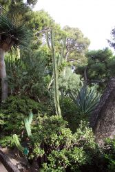 Part of the gardens near the oceanographic museum on Monaco. Photo