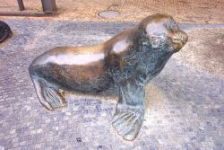 Sculpture of harbor seal. Photo