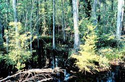 ACE Basin National Estuarine Research Reserve Photo