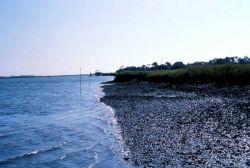 ACE Basin National Estuarine Research Reserve Image