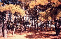 Narragansett Bay National Estuarine Research Reserve Forested area on Pine Knoll, Prudence Island. Photo
