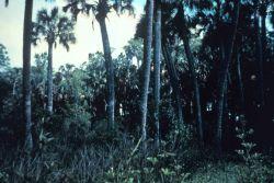 Apalachicola National Estuarine Research Reserve Image