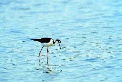 Jobos Bay National Estuarine Research Reserve Photo