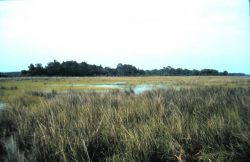 Grand Bay National Estuarine Research Reserve Photo