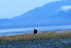 Padilla Bay National Estuarine Research Reserve Photo