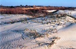 Sapelo Island National Estuarine Research Reserve Photo