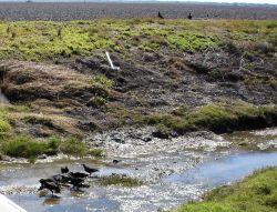 Mission-Aransas National Estuarine Research Reserve. Photo