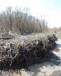 Dry Trees and grasses - Estuarine Research Reserve Collection Photo