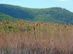 Plants & Trees - Estuarine Research Reserve Collection Photo