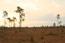 Grand Bay Savanna, one of the few remaining savannas in the area. Photo
