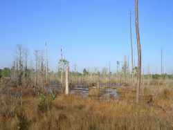 A freshwater marsh to the west of Bayou Heron Road at the Grand Bay NERR. Image