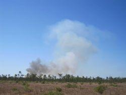 A prescribed fire on the Grand Bay Savanna. Image