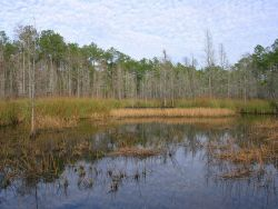 A freshwater marsh within the Grand Bay NERR boundary. Photo