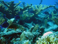Reef scene with blue tang and parrotfish Photo