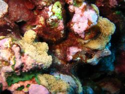 Colorful living reef scene Photo