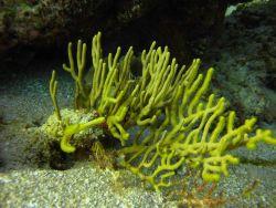 Coral? Algae? Photo