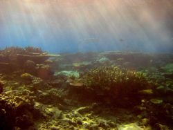 Sunlight filtering down through water onto the reef with large barracuda swimming in distance. Photo