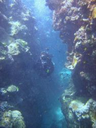 Scuba diver investigating a crevice in the reef Photo