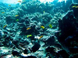 Reef scene with anthias and damselfish Photo