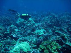 Scuba diver over diverse coral reef Photo