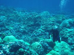 Scuba diver over diverse coral reef Photo