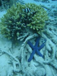 Scleractinian coral Photo