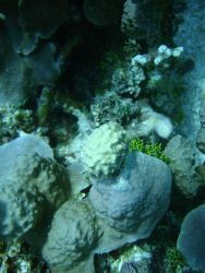 Scleractinian corals. Photo