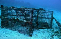 Marine debris - a derelict fish trap with an entrapped spiny lobster. Photo