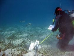 A scientist having a close encounter with two porcupinefish (Diodon hystrix). Photo
