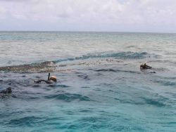 Snorkelers guiding a derelict net back to the inflatable boat for transport to the contract vessel CASITAS. Photo