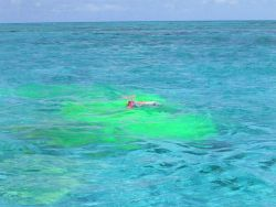 Green dye for determining current direction within Pearl and Hermes Atoll Lagoon Photo